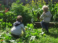 Kids in the Vegetable Garden by Little Veggie Patch Co, via Flickr