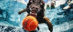 Funny Underwater Dogs!!