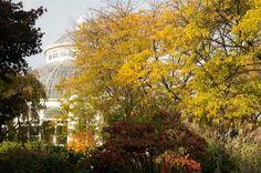 Mulberry loves exploring the New York Botanical Garden!