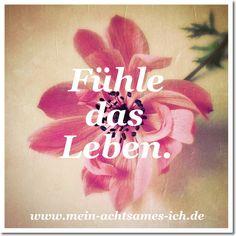 Inspiration: Fühle das Leben – www.mein-achtsames-ich.de