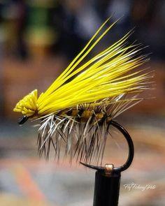 Las 1039 Mejores Imágenes De Pesca En 2019 Pesca Señuelos De Pesca Y Ir De Pesca