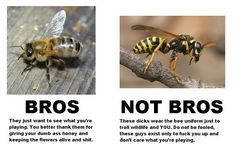 """Bees are """"Bros"""". They just want to see what you are playing. Wasps are """"Not Bros"""". Wasps are dicks who wear the BEE uniform and will F you up."""