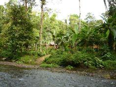 Fotos de Estacion Biologica Tamandua - Costa Rica