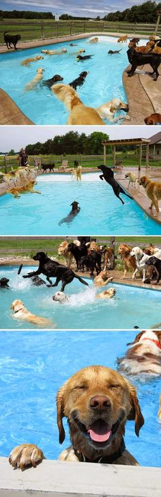 Dog Pool Party - this is the happiest thing ever.