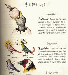 2 Codex Seraphinianus - Bird in Lower left hand corner.
