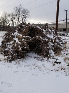 A homeless person in my neighborhood made shelter out of a fallen tree trunk.