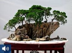 Bildergebnis für bonsai auf Stein