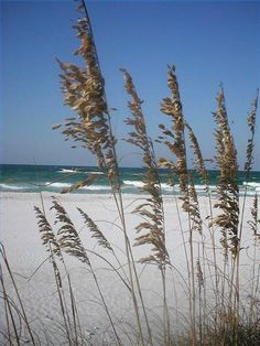 """""""Kiawah Island, South Carolina. . . love it."""" My family loves this beach, too. It is a beautiful, unspoiled beach."""