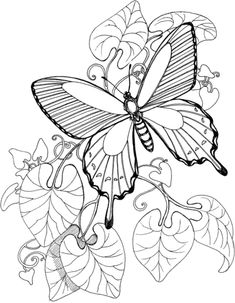 Butterfly Is Flying On The Garden Coloring page
