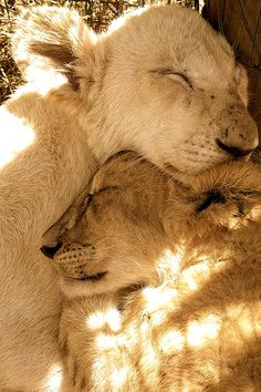Animal Hugs..warm. La naturaleza en su esplendor.
