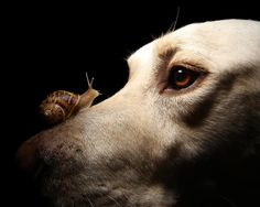 Dogs and snails can sometimes mean lungworm - it's spreading. Find the facts on the dogsrescued site.  dogsrescued.com