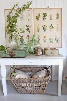 decoración ilustraciones botánicas