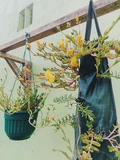 Flower in bag #bag #pot