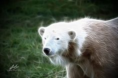 Fractal Polar Bear