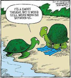 Sad tortoise