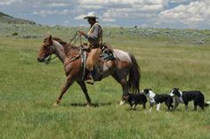 Red Roan Ranch Gelding for Sale - For more information click on the image or see ad # 33915 on www.RanchWorldAds.com