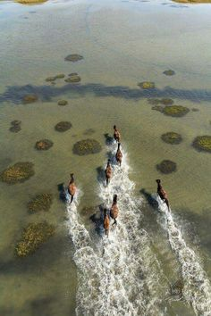 This may be one if the coolest shots we've seen Brad Styron catch lately, the Wild ponies at Shackelford Banks