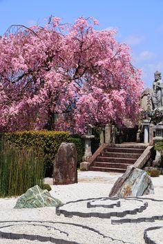 cherryblossoms Enko-ji Temple in Kyoto,Japan