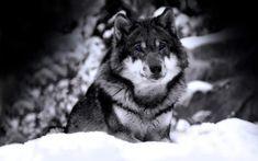 fondo-de-lobo-6