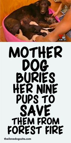 Mother Dog Buries Her Nine Pups To Save Them From Forest Fire!