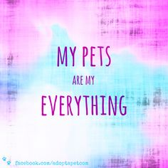 Don't you just love your animals? <3 #adoptdontshop #rescuedismyfavoritebreed #pets