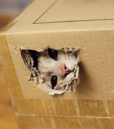 Why Do Cats Do That?! 3 Weird Cat Behaviors…Explained | eBay