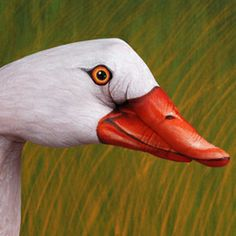 Fantastic Animal Hand Paintings by Italian Artist Guido Daniele