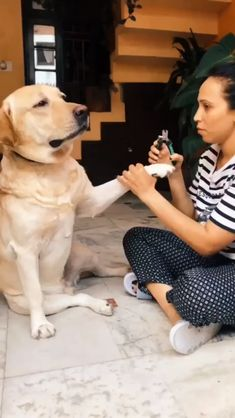 Dog Becomes Total Drama Queen When Owner Clips Its Nails - Süße und lustige Tiere - Hund Funny Dog Memes, Funny Dog Videos, Funny Dogs, Cute Funny Animals, Cute Baby Animals, Funny Cute, Cute Puppies, Cute Dogs, Cute Babies