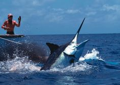 Catch a black marlin