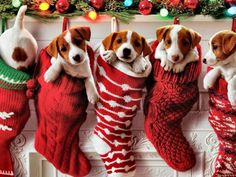 Christmas Puppies ☺ (35 pieces)