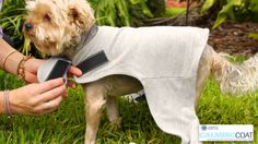 This spring season, don't forget to strap your pet in the comfortable, stylish and calming #CalmingCoat! #PetAnxiety