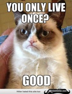 17 Totally Amazing Grumpy Cat Memes
