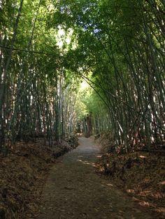 坂町の竹藪(広島)
