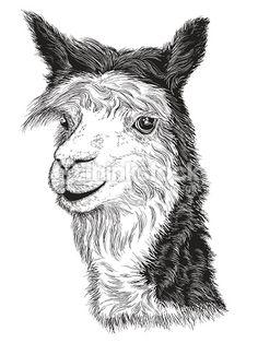 Realistische Skizze von LAMA Alpaca Schwarzweiss