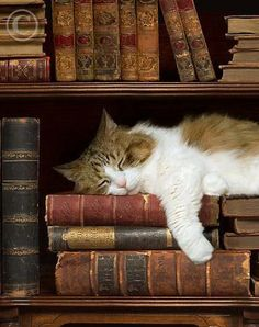 Nice warm pile of books makes a great place to take a Cat Nap!