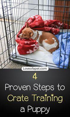 Boston Terrier Obedience… #dogtrainingtips