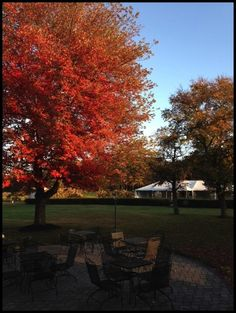 A beautiful place to hold a wedding. Peppadew Fresh Vineyards and Winery. Autumn trees on the 15 acre flower farm and winery. #wedding #weddingvenue #njweddings