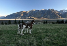 Erewhon Station, New Zealand - Clydesdale Foals 2011