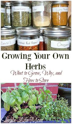 Growing Your Own Herbs indoors during all times of the year. Natural frugal simple green living from Simple Life Mom Growing Your Own Herbs indoors during all times of the year. Natural frugal simple green living from Simple Life Mom Herb Garden Design, Diy Herb Garden, Herb Gardening, Indoor Gardening, Container Gardening, Flower Gardening, Garden Ideas, Urban Gardening, Potted Garden