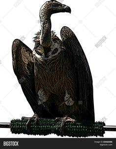 Image result for vulture illustration