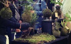 Tampereen Koti & Piha messut 2019 Koti, Lifestyle, Garden, Plants, Garten, Lawn And Garden, Gardens, Plant, Gardening