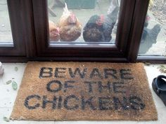 OMG I need this!! I have chickens that beg at the door like that