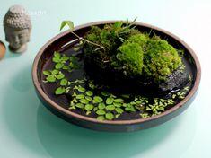 Brilliant And Creative DIY Nano Pond Garden Combination - Terrarium - Indoor Pond, Indoor Water Garden, Indoor Plants, Indoor Gardening, Gardening Tips, Organic Gardening, Dish Garden, Home Vegetable Garden, Bottle Garden