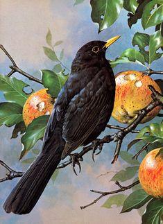 Black bird illustration paint 59 Ideas for 2019 Gravure Illustration, Bird Illustration, Illustrations, Motifs Animal, Birds Of America, All Birds, Bird Pictures, Vintage Birds, Wildlife Art