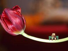 Sag's mit Rosen... Oder Tulpen, also wenigstens mit Blumen :) Die Mini-Figuren von NOCH kreativ tun ihr Übriges dazu und schnell ist eine faszinierende Fotoszene entstanden! Die kleinen Modellfiguren findet Ihr auf www.noch-kreativ.de