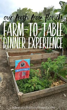 We attended a farm-to-table dinner at a local farm which highlighted so many of Florida's delicious, colorful, and locally-grown foods! Click through for photos and details of the event! #FreshFromFlorida #IC #ad