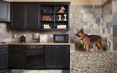 40 Easy Dog Wash Station Ideas at Home – Tail and Fur – Laundry Room İdeas 2020 Pet Washing Station, Dog Station, Dog Suit, Animal Room, Animal House, Dog Wash, Inside Home, Dog Shower, Dog Rooms