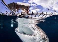 Quand un requin-baleine vient à la rencontre de pêcheurs locaux en Papouasie Nouvelle-Guinée