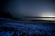 Glowing beach picture: bioluminescent microbes light up sand in Florida