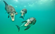 Laughing Dolphins Photograph by Atmo Kubesa -- National Geographic Your Shot